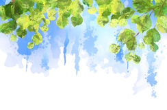 Green leaves tree branches vector watercolor vector illustration