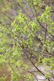 Green leaves in spring stock images
