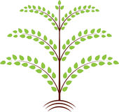 Green Leaves Tree Illustration. Isolated green leaves spring tree illustration, plant, flora, nature, deciduous tree Royalty Free Stock Images