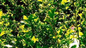 Green leaves on the tree moving in the wind stock video footage