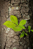 Green leaves. On a tree stem Royalty Free Stock Images