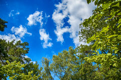 Green leaves of trees on blue sky Stock Photos