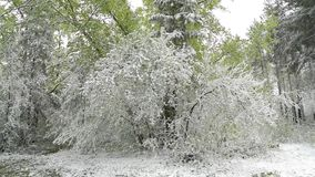 Green leaves of the trees and grass covered with snow after weather changes stock video