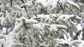 Green leaves of the trees and grass covered with snow after weather changes stock video footage