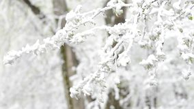 Green leaves of the trees and grass covered with snow after weather changes stock footage