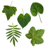 Green leaves from trees and shrubs stock images