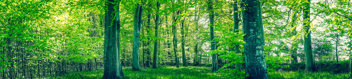 Green leaves on the trees in the spring Stock Images