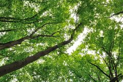 Green leaves of trees Royalty Free Stock Photography