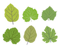 Green leaves of trees, vector illustrations set Stock Images