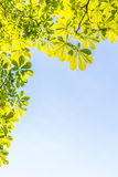 Green leaves treetop with blue sky background horizontal. Stock Images