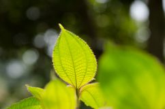 Green leaves in tropical forest Stock Images