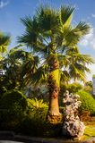 Green leaves of tropical palm. blue sky stock images