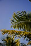 Green leaves of tropical palm. blue sky royalty free stock photos