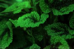 Green leaves of tropical plant macro Stock Photo