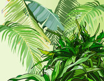 Green leaves of tropical plants Stock Image