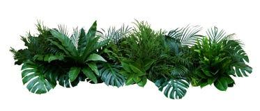 Green leaves of tropical plants bush Monstera, palm, fern, rubber plant, pine, birds nest fern floral arrangement indoors garden