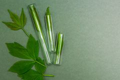 Green leaves in tubes, top view. Homeopathy, space for text royalty free stock photography