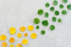 Free Green Leaves Turning Into Yellow Stock Photo - 126461560