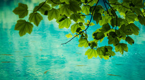 Green leaves and turquoise lake Stock Images