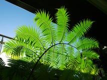 Green leaves under sunlight Stock Photos