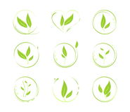 Green leaves. Vector elements for design. Set of 9 abstract green leaf icons and graphics Royalty Free Stock Photos