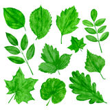 Green leaves vector set. Green leaves vector se isolated on white. Vector illustration Royalty Free Stock Image