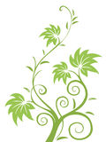 Green leaves and vines pattern. Illustration drawing of green leaves and vines pattern Royalty Free Stock Photography