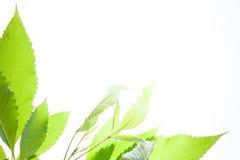 Green leaves vintage background Stock Image
