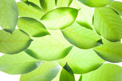 Green leaves vintage background Stock Images