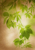 Green leaves on a vintage paper Royalty Free Stock Images