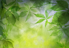 Green leaves on a vintage paper Royalty Free Stock Photos