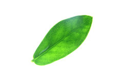 Green leaves visible pattern. Royalty Free Stock Image