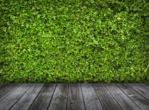Green Leaves Wall And Old Wood Floor Stock Photo