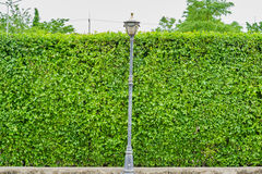 Green leaves wall background with lamp post Stock Images