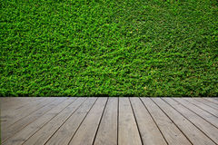 Green leaves wall background and wooden floor. Stock Image