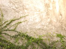 Green leaves on wall brick background Stock Photo