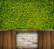 Green leaves wall, brick and wood for background Stock Photography