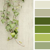 Green leaves on a wall, with color palette Royalty Free Stock Photo