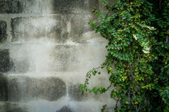 Green leaves on wall with copy space Royalty Free Stock Photography