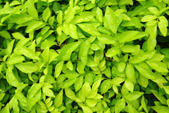 Green leaves wall paper background Stock Images