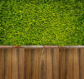 Green leaves wall and wood fence for background Royalty Free Stock Images