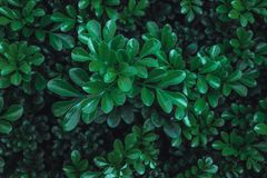 Green leaves wallpaper background Stock Images