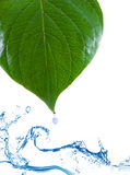 Green leaves in water. Royalty Free Stock Photo