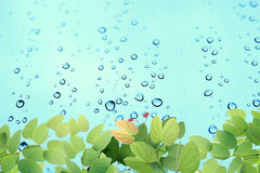 Green leaves on water drop Stock Photos