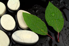 Green leaves with water drops, and white stones Royalty Free Stock Photography