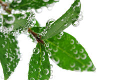 Green leaves in water Stock Photos