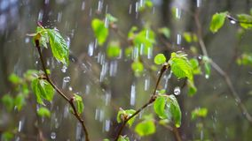 Green leaves and water stock video footage