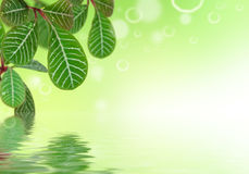 Green leaves with water reflection Royalty Free Stock Photography