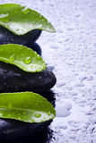 Green leaves with water on stones negas Stock Photos