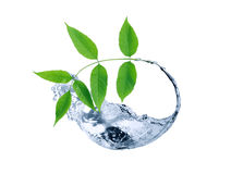Green Leaves In Water Stock Image
